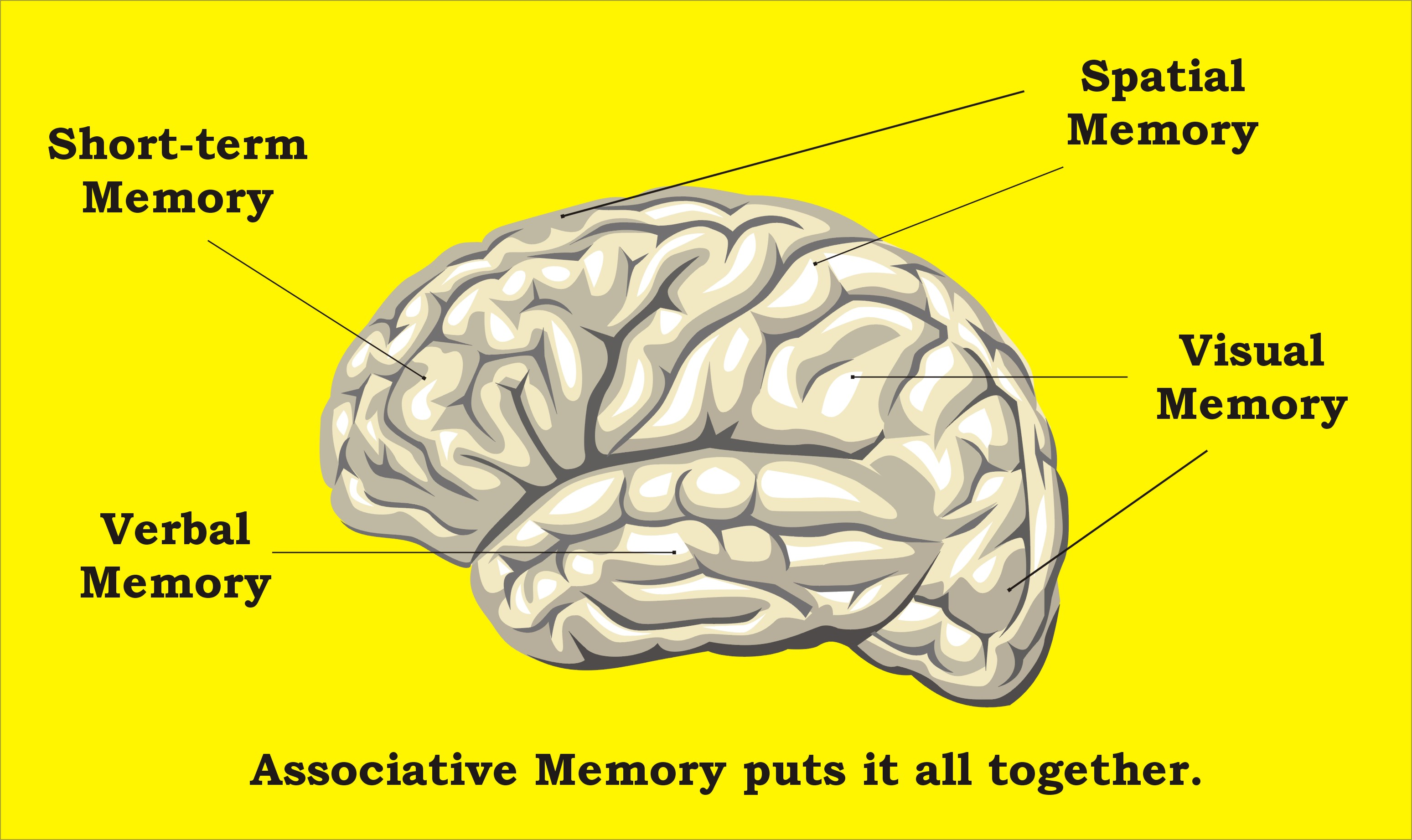 Human Associative Memory Associative Memory This in